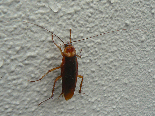 Battling Roaches In Your Apartment Building